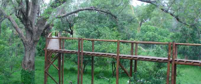 The walkway in the riverine woodland of the Limpopo